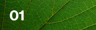 Lloyd's climate leaf 01